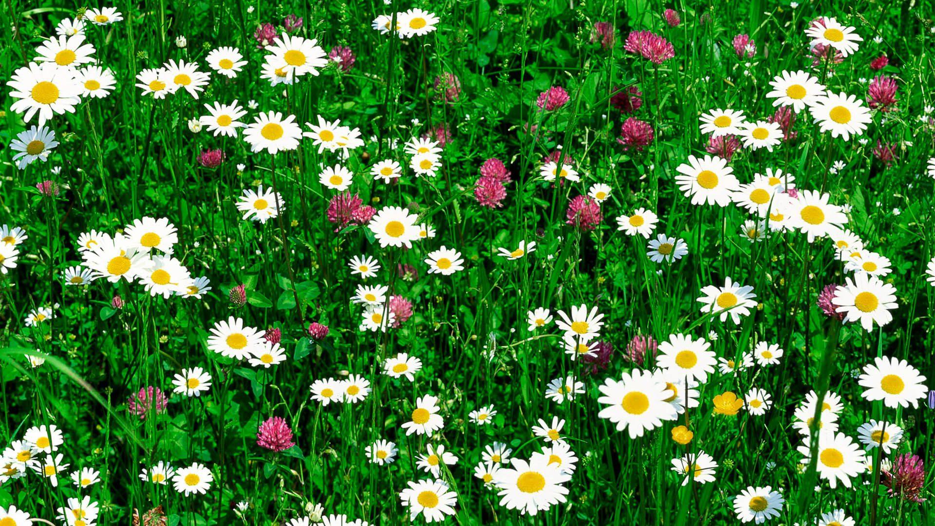 Фото цветы и небо