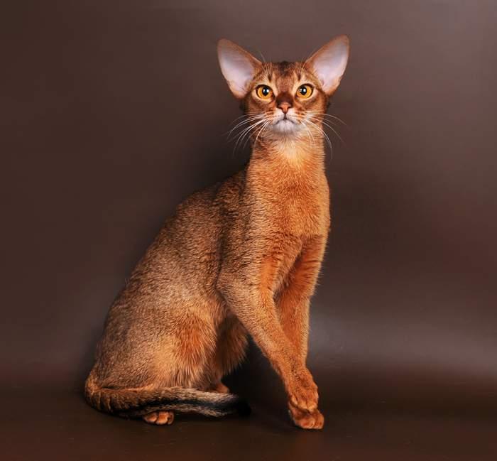 Красивые котята картинки фото