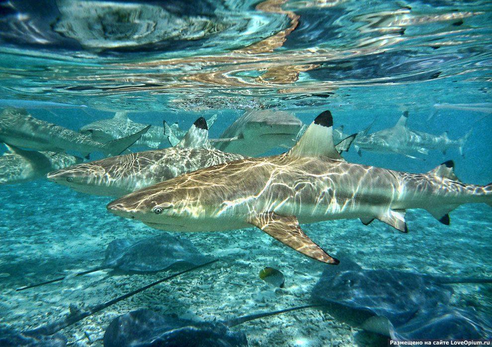 Картинки акулы большие