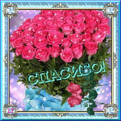 Шикарный букет роз красных фото