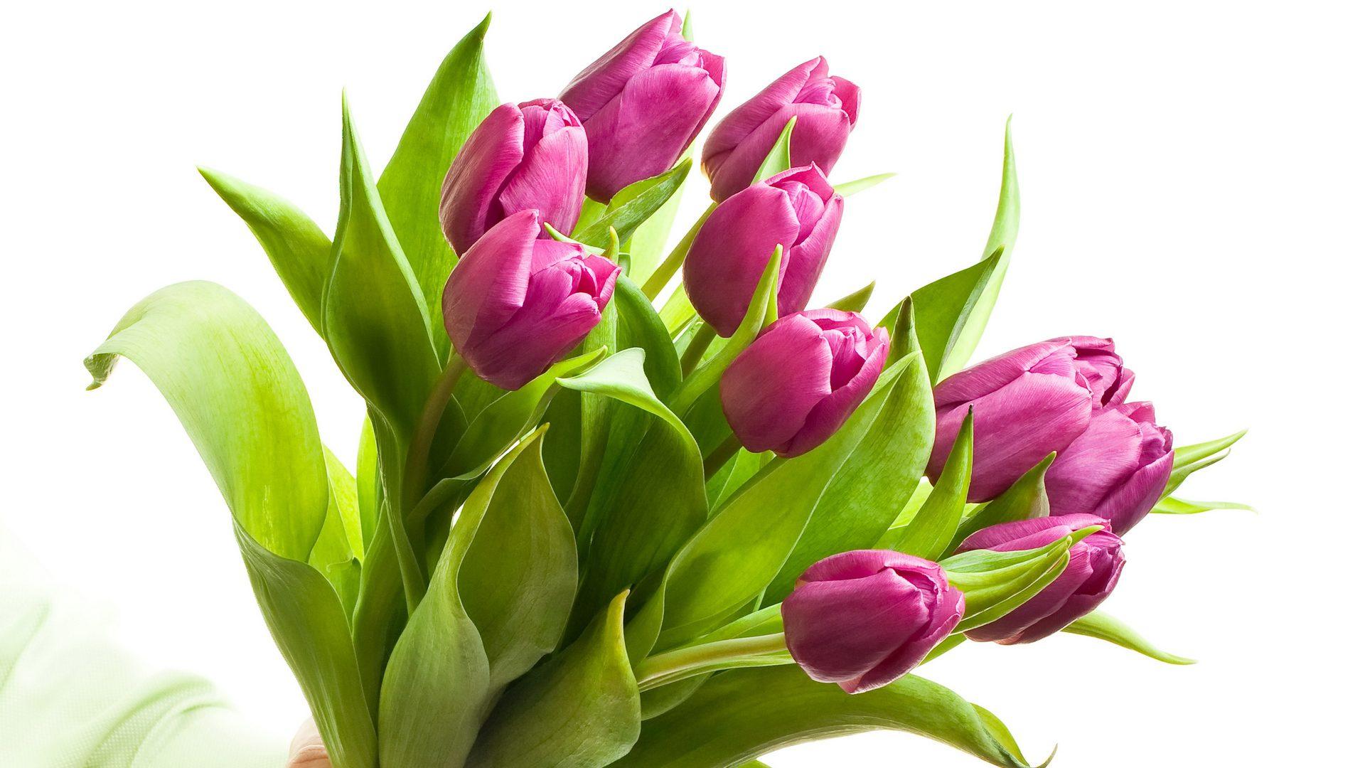 Красивые орхидея фото