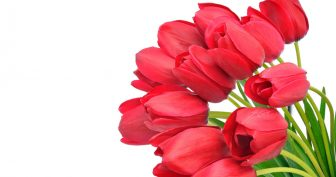 Картинки красивые цветы на белом фоне (36 фото)