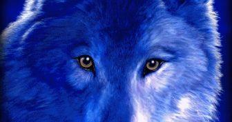Красивые картинки волки (40 фото)