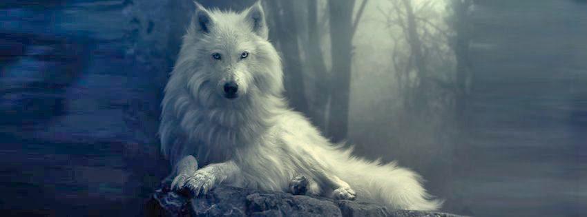 Крупный план полярный волк  НОВОСТИ В ФОТОГРАФИЯХ