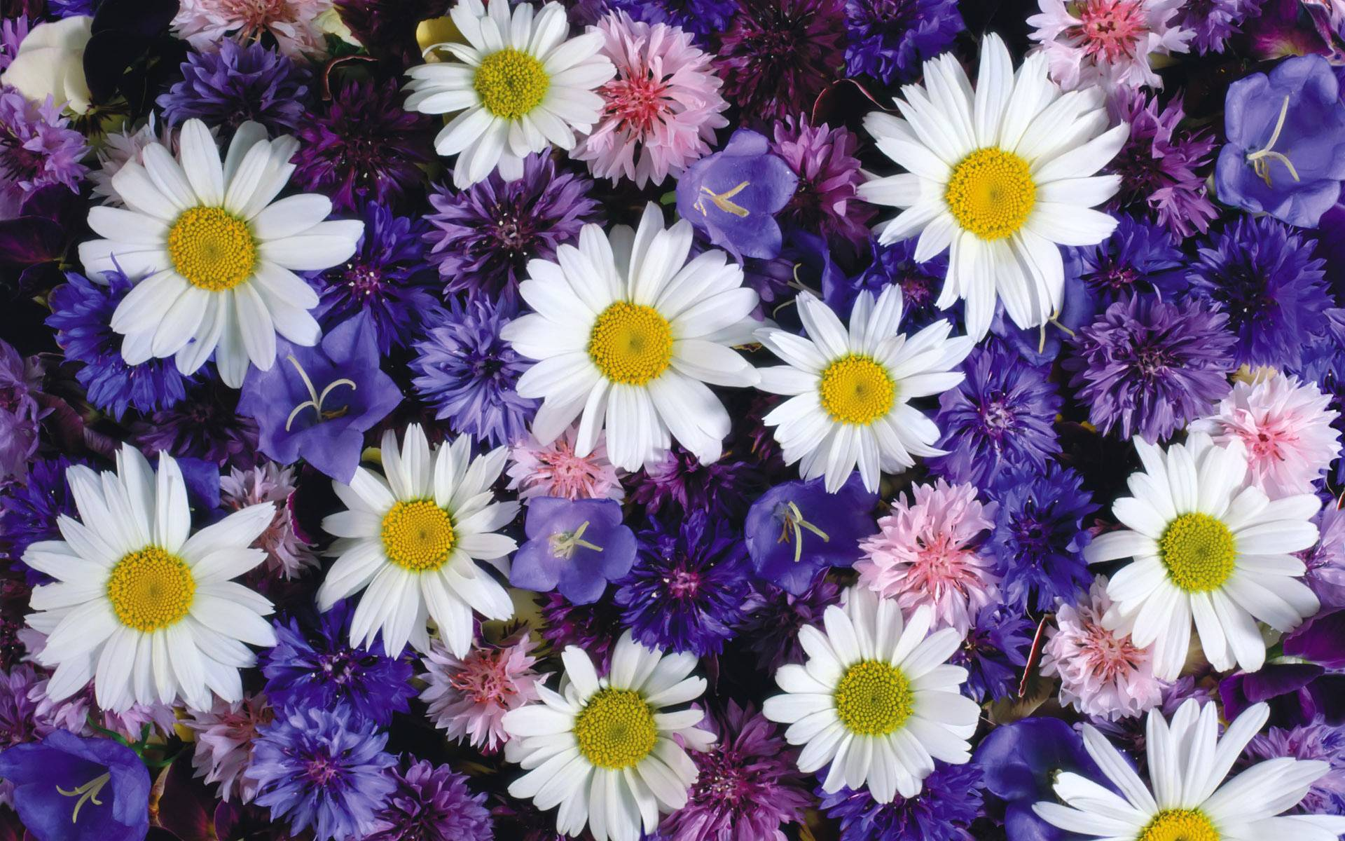 Картинка цветы в корзине