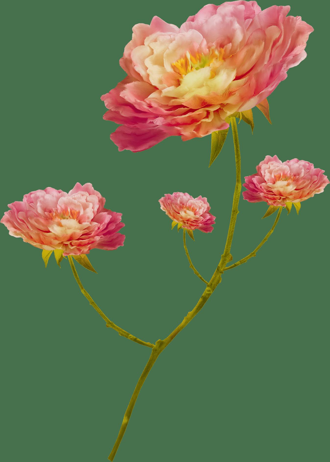 Фото цветы полевые на рабочий стол на весь экран