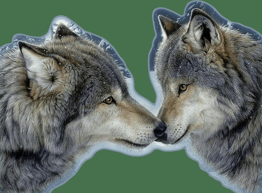 Волк к чему снится во сне Если видишь во сне Волк что
