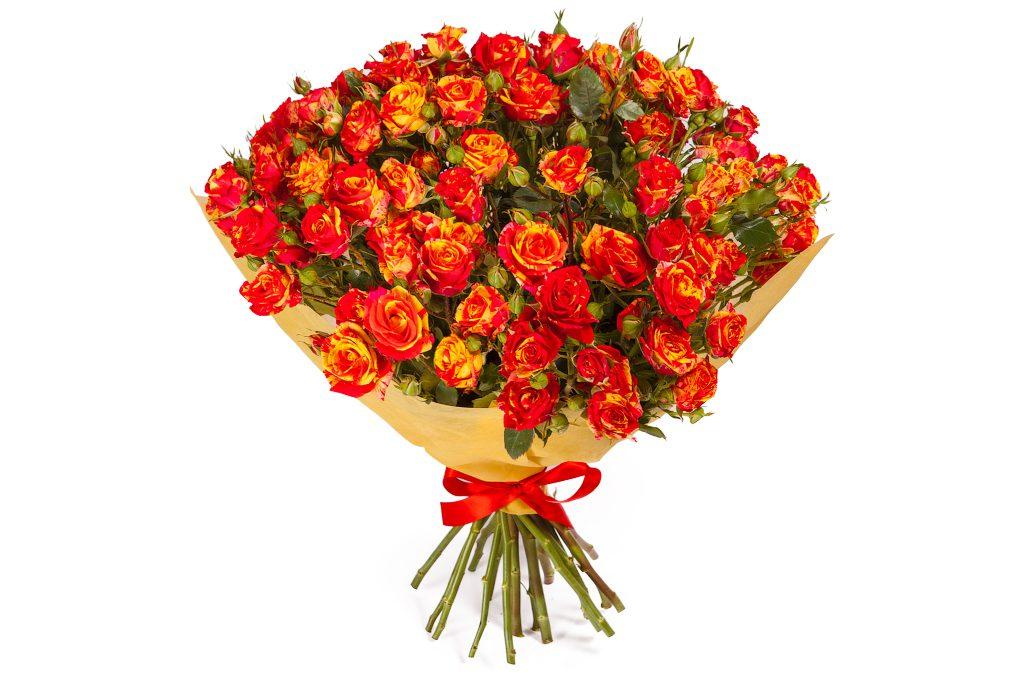 Фото всех цветов розы
