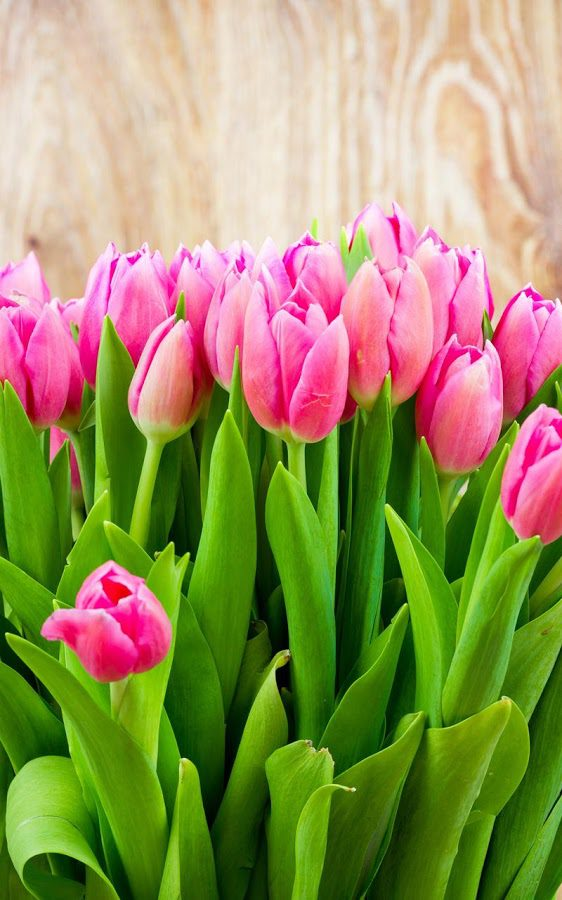 Цветы в Омске  интернет магазин Flora1
