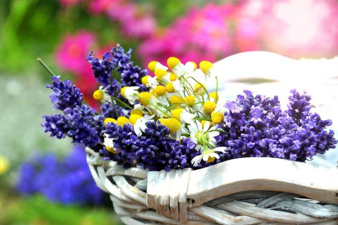 Фото полевых цветов на рабочий стол на весь экран
