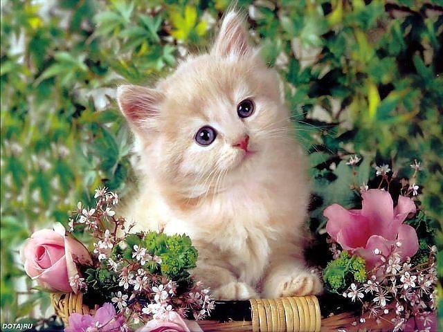 Котёнок в цветах фото