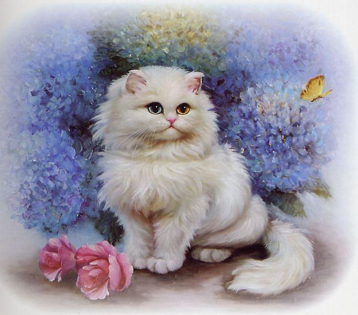Красивая персикового цвета кошка, обои с кошками 17