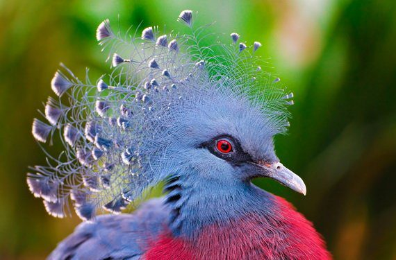 Птичка колибри картинка