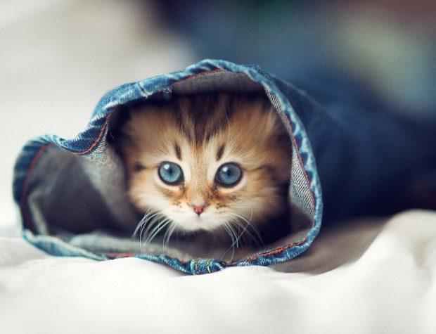 красивые котят картинки