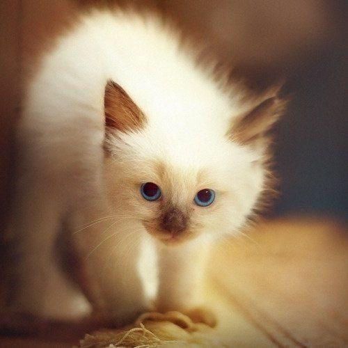 Картинки милые котята на рабочий стол