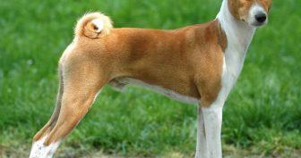 Картинки красивых собак (35 фото)