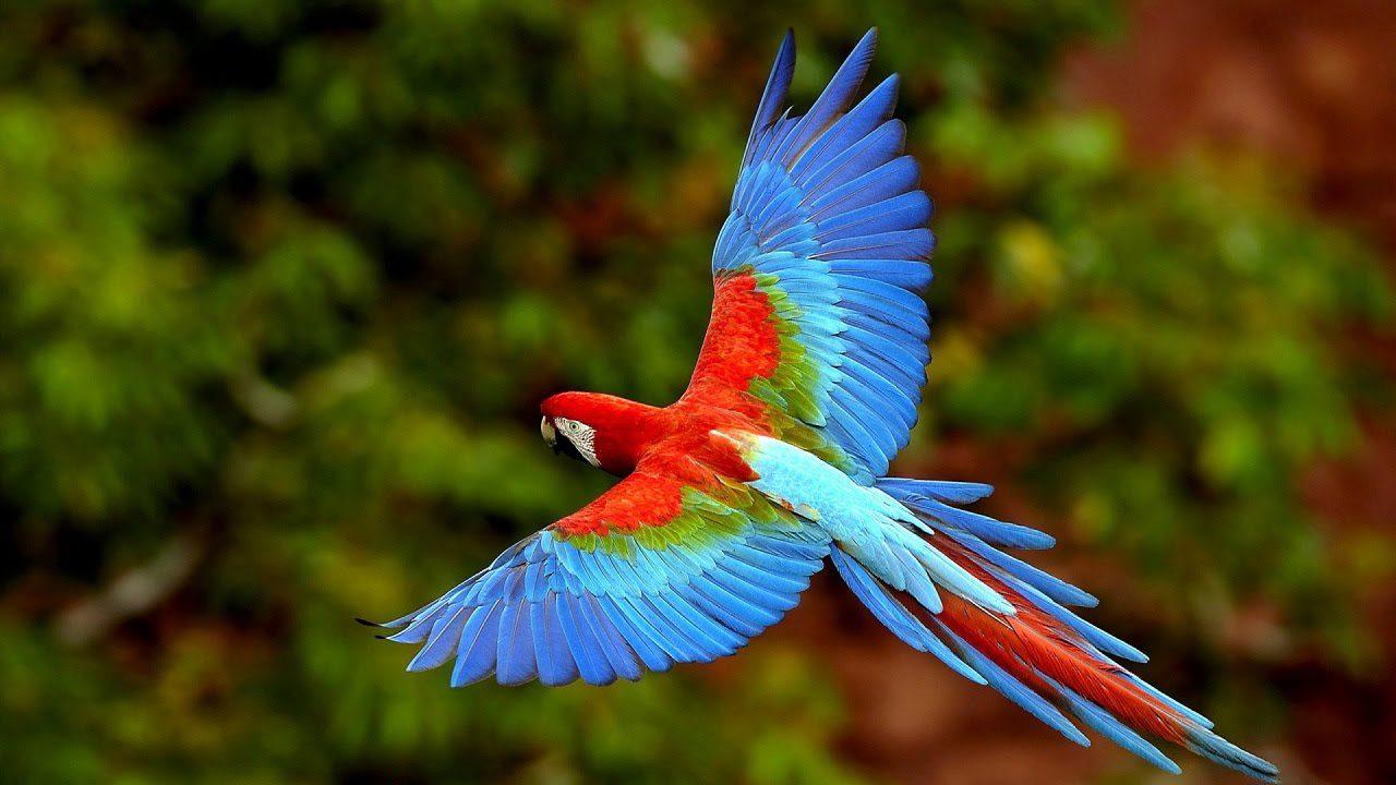 DOSKAby Попугаи и птицы  Попугаи Молоденькие попугайчики