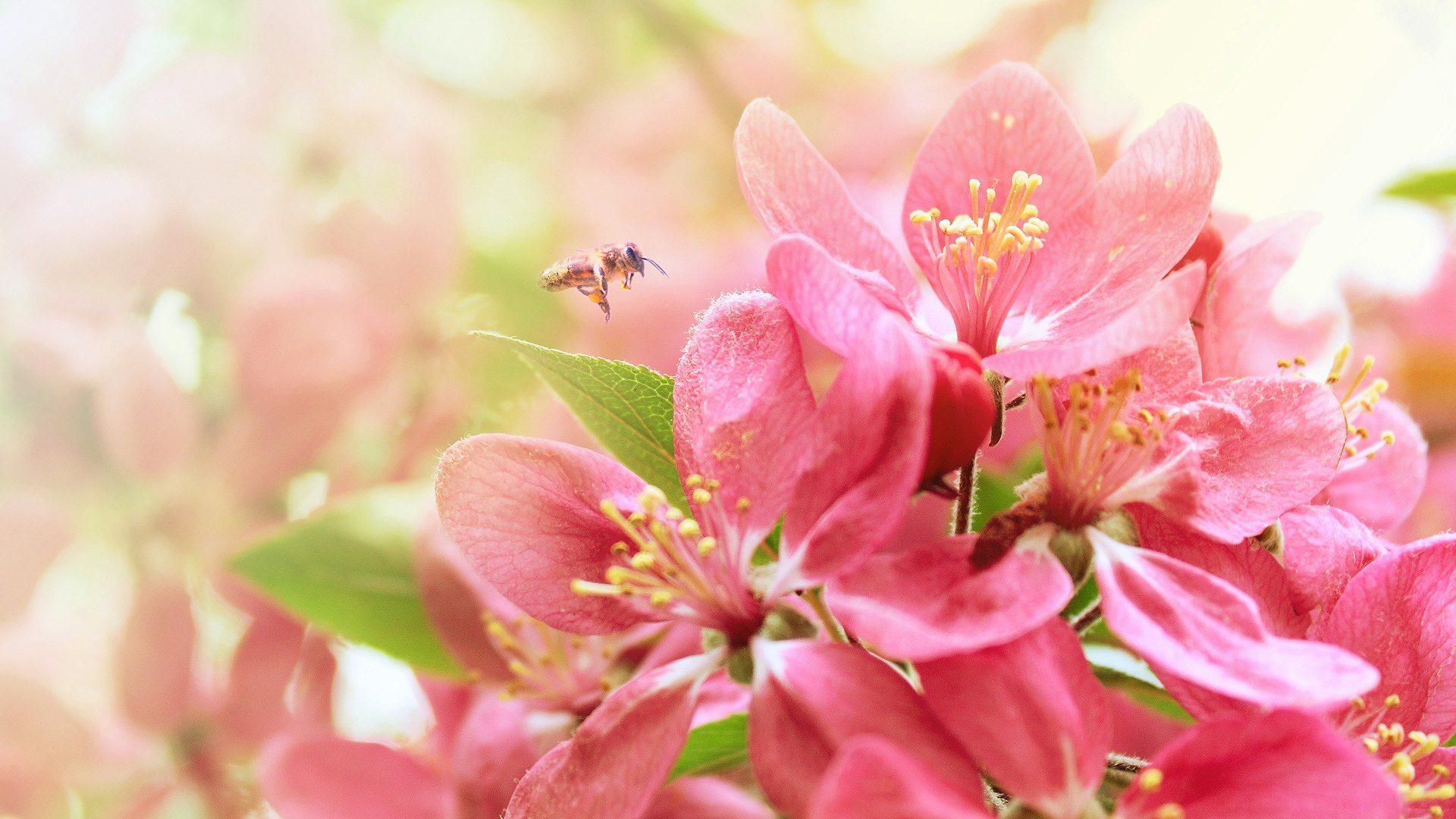 Многолетники фото многолетних садовых цветов