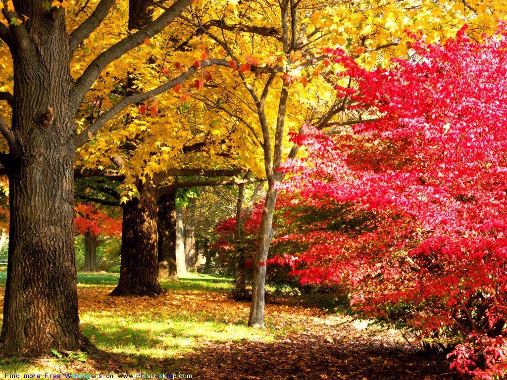 Картинки красивая осень (36 фото) • Прикольные картинки и юмор Собака и Кошка