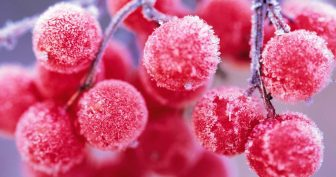 Картинки на рабочий стол красивой зимы (35 фото)