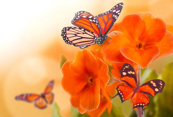 фото красивых бабочек на цветах