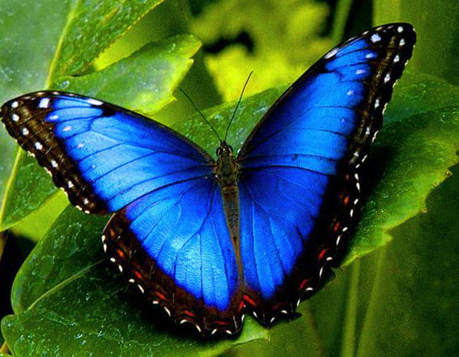 Картинки бабочка нарисованная