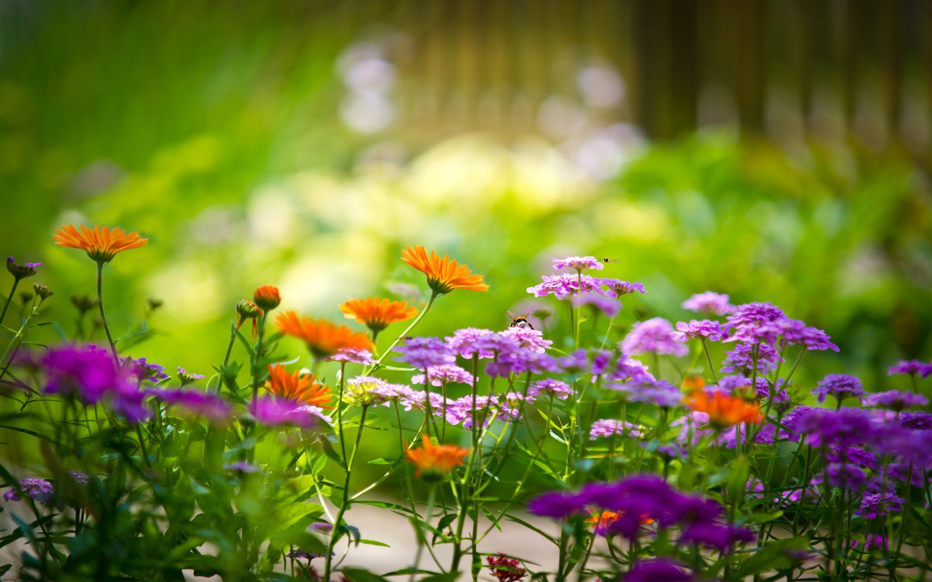 роса на цветах макро фото