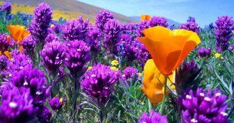 Красивые картинки полевых цветов (35 фото)