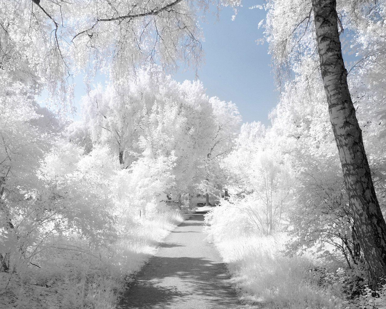 Фото елка