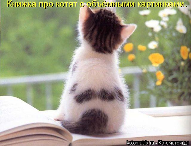 Фото на заставку котят