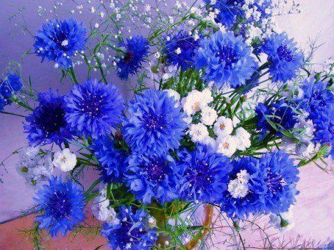 Открытка цветы полевые