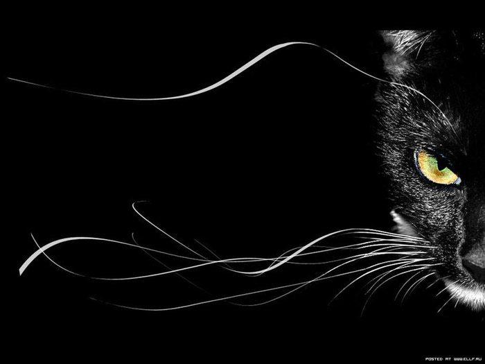 красивые чёрные картинки