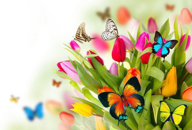 Картинки цветы и бабочки