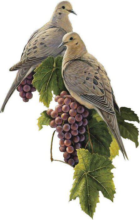 Колибри птички картинки