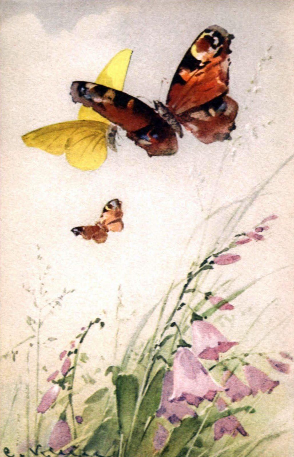 Рисунок колибри на цветке