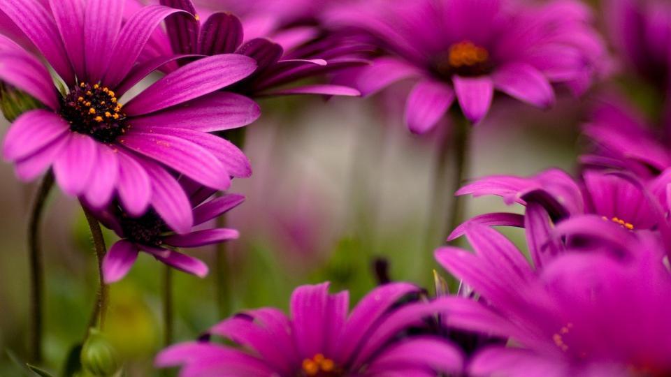 картинки цветы на телефон красивые