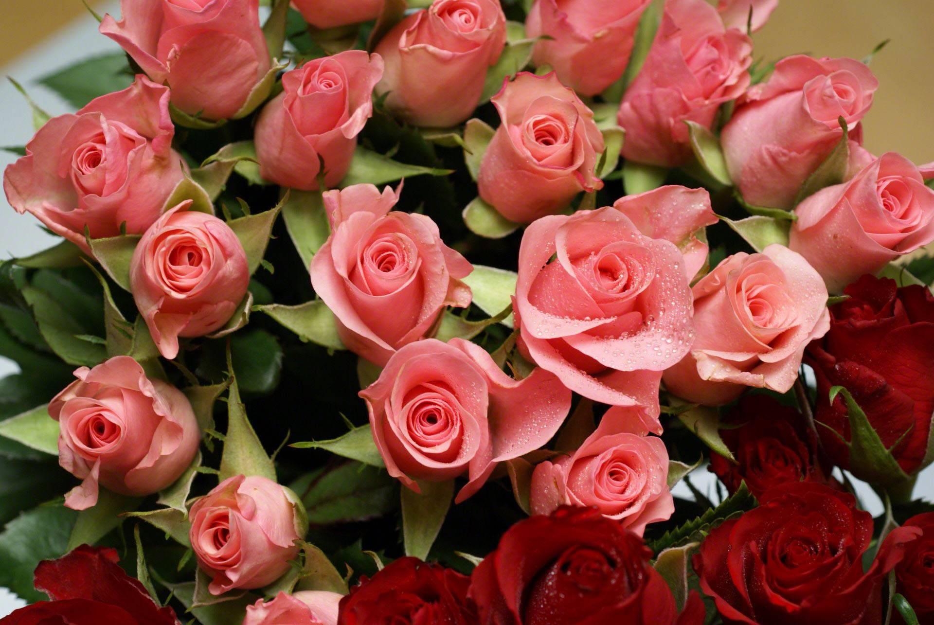 Открытки с розами наташе