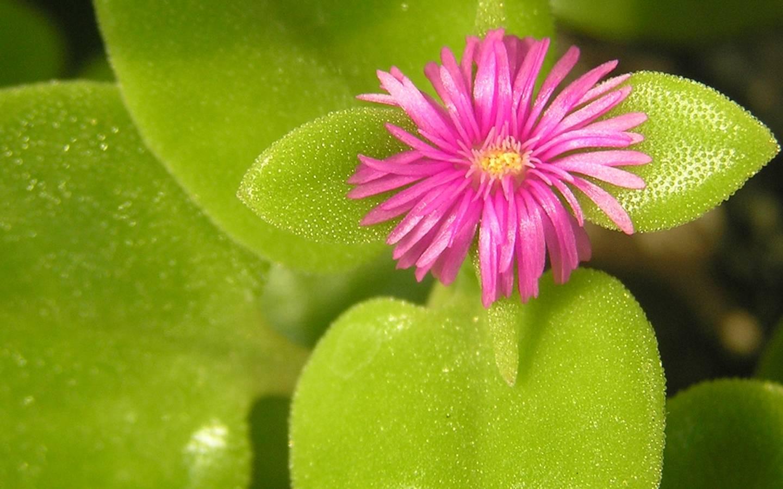 Стихи про орхидею  chtotakoelyubovnet