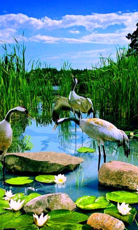 фото на заставку природы