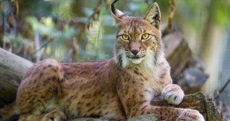 Картинки самых красивых в мире животных (30 фото)