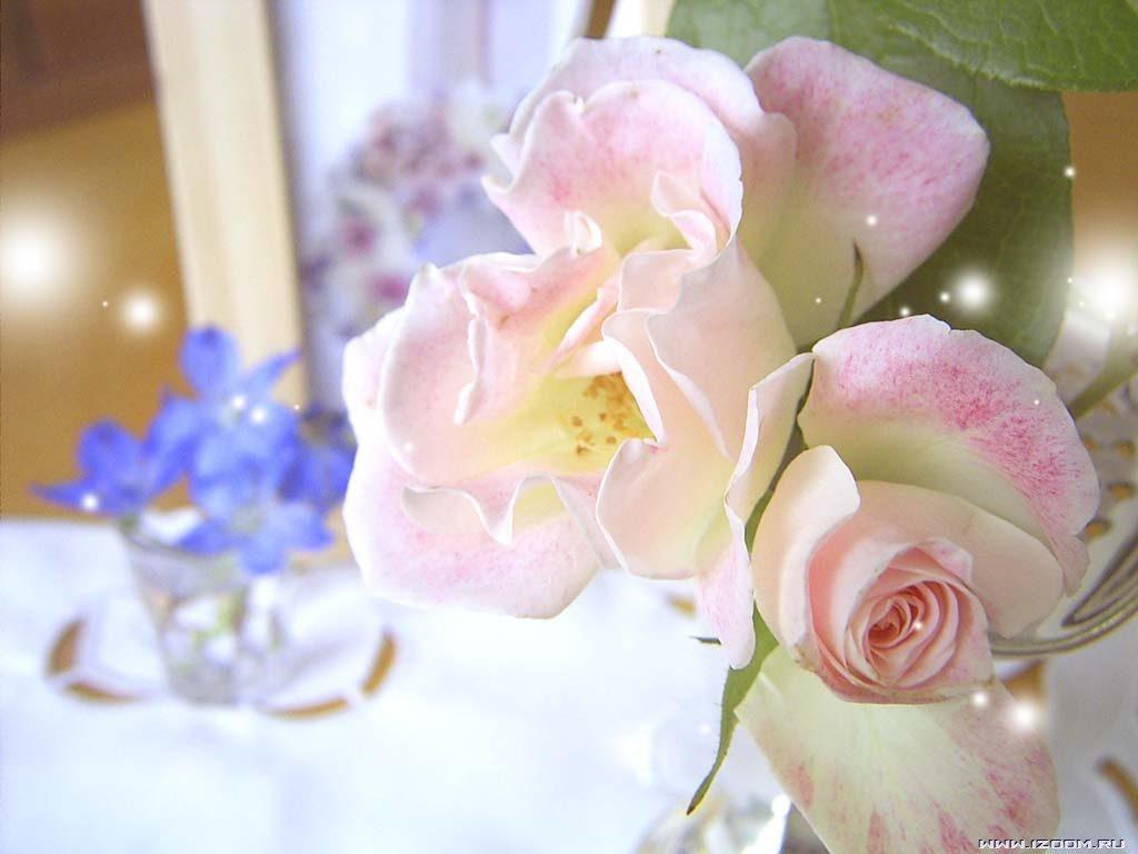 Букеты роз для девушки картинки самые красивые