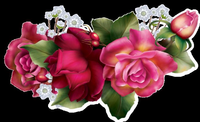 Картинки цветов розы нарисованные  DreemPicscom