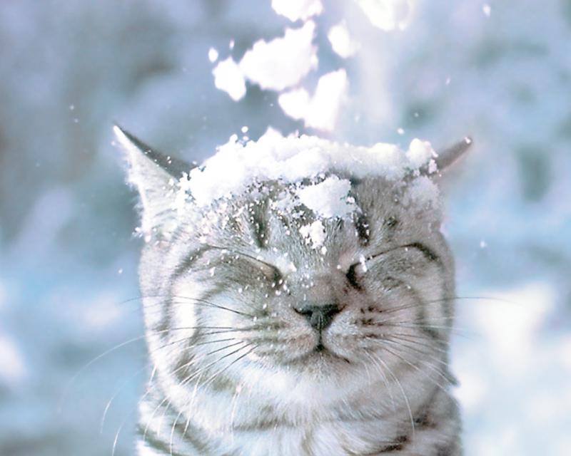 Картинки красивой зимы