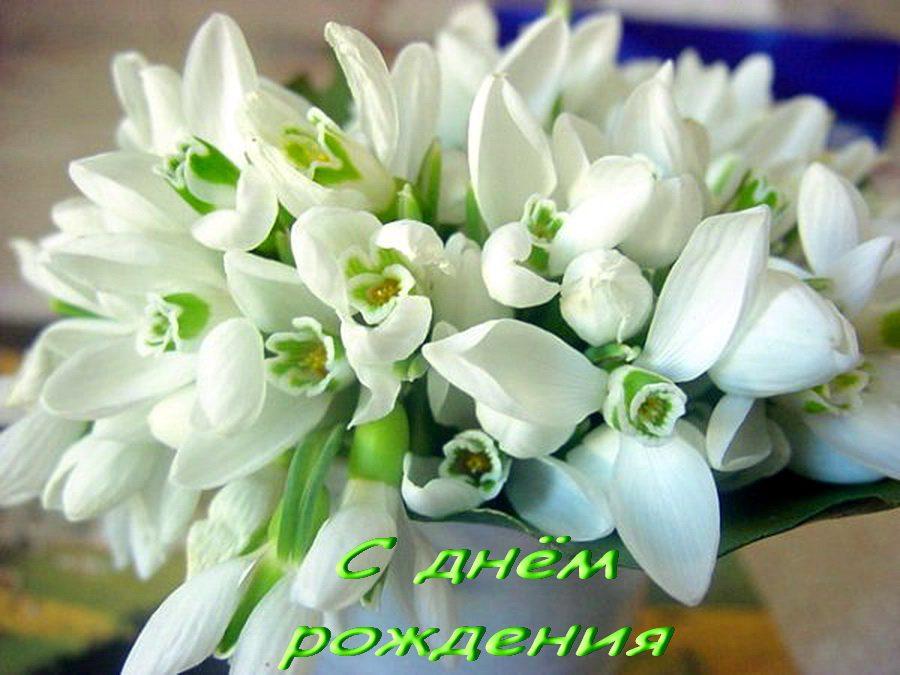 Фото цветы без повода