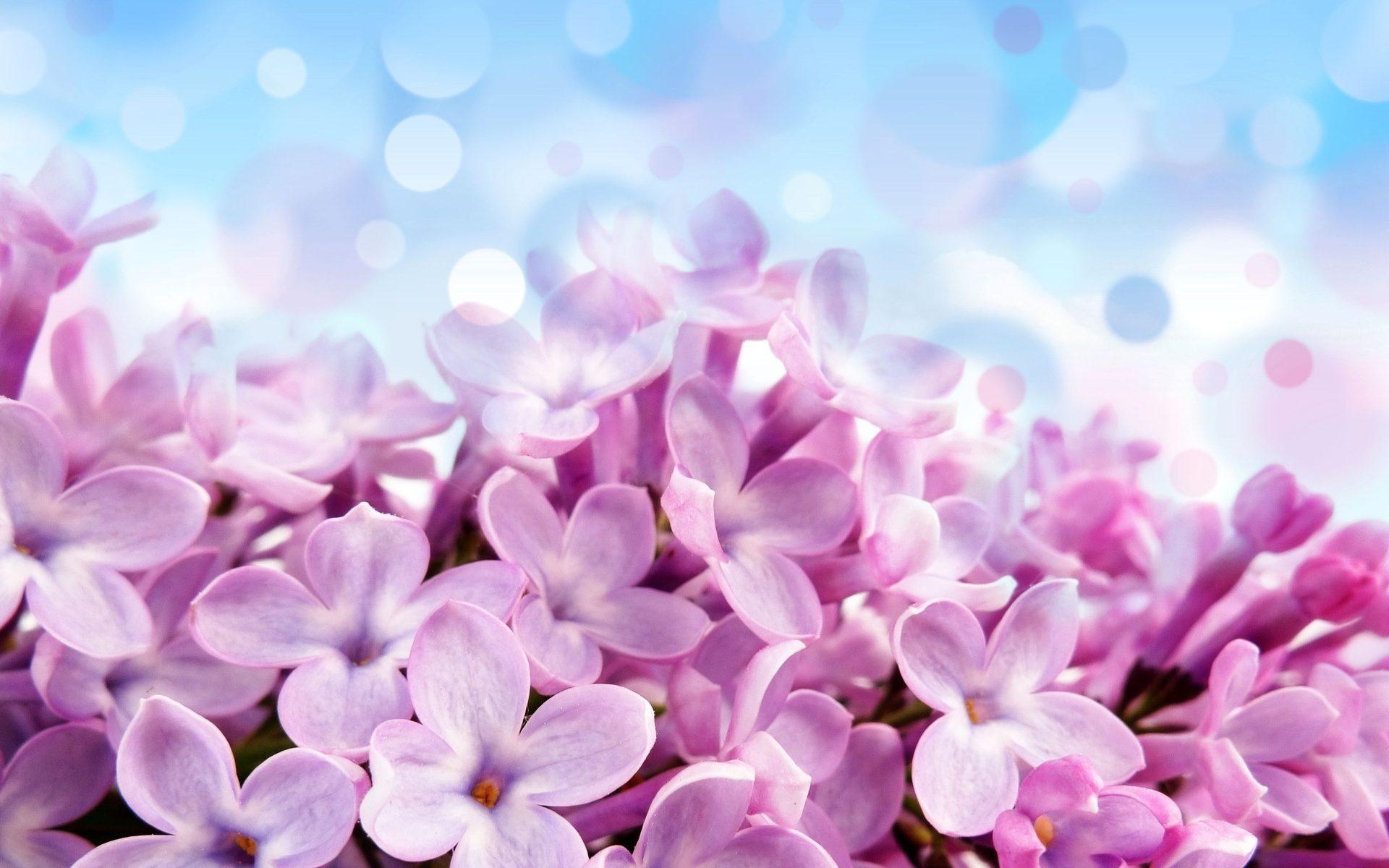 Весна  Обои для рабочего стола красивые картинки
