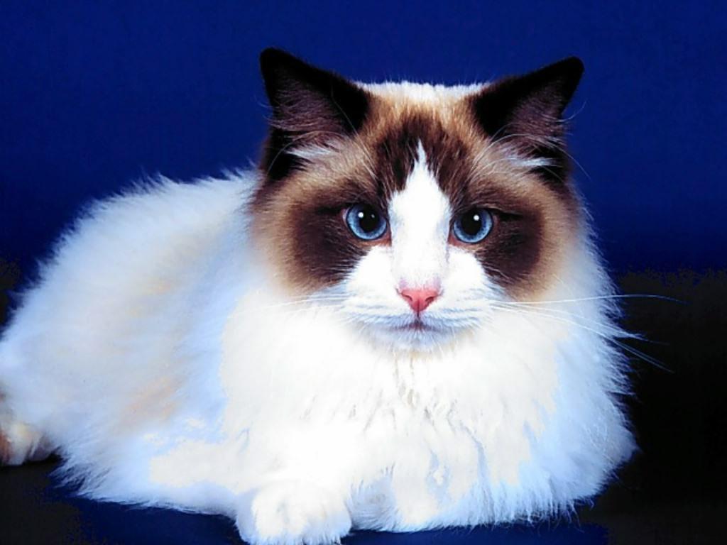 красивые картинки с кошками