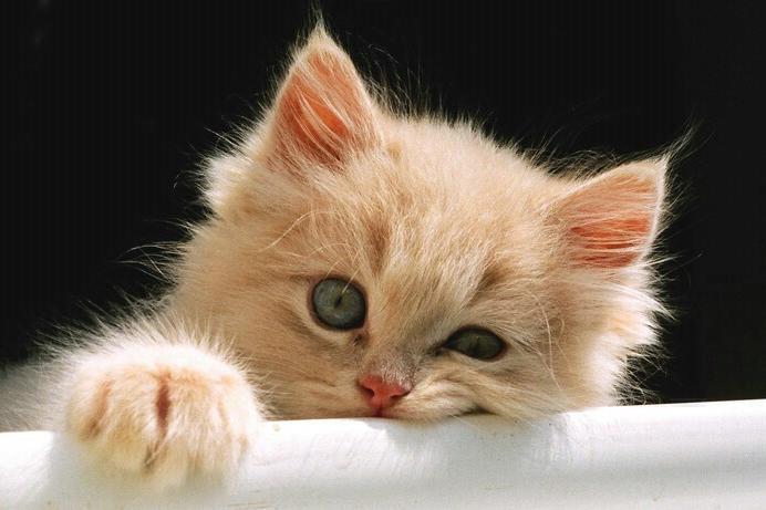 красивые кошечки фото