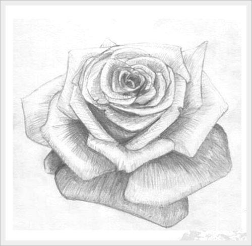 нарисованная роза фото