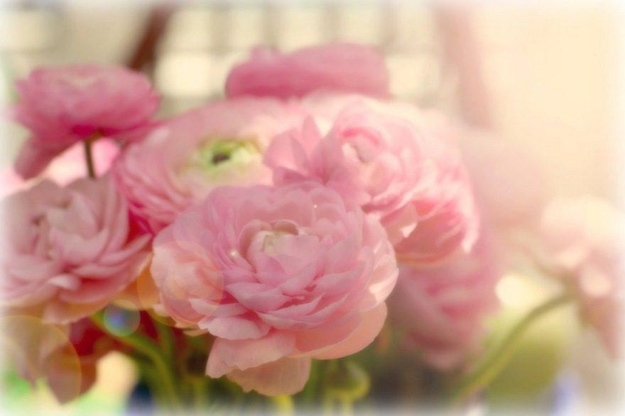 Букет цветов картинка красивая