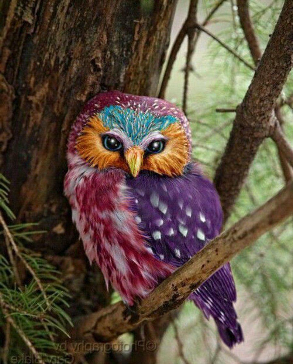 Awesome Baby Images: Картинки красивые совы (35 фото) • Прикольные картинки и юмор